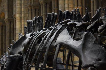 architecture-bones-building-236482